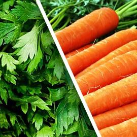 Петрушка и морковь