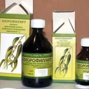 Лечение воспаления дёсен хлорофиллиптом